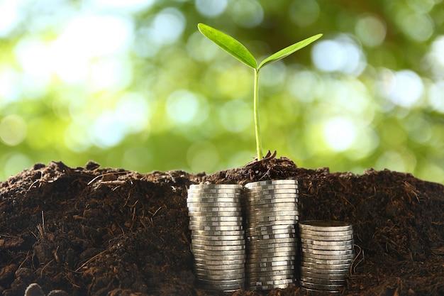 コインの山の上にある小さな木々。 Premium写真