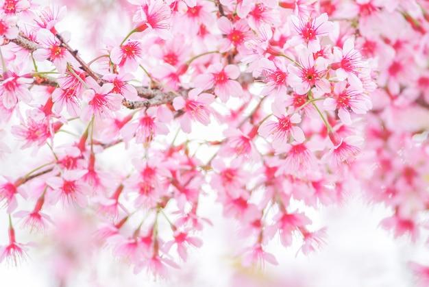 ソフトフォーカスと春の桜 Premium写真