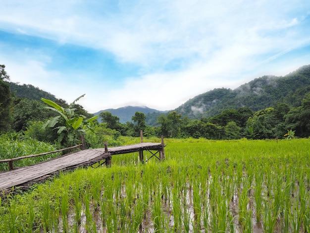 田んぼの木製の経路 Premium写真