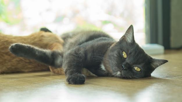 黒い猫は窓の近くに横たわっています。 Premium写真