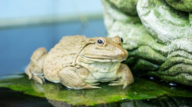 池に一匹のカエル。 Premium写真