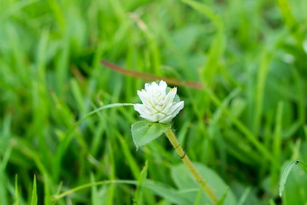 黒クモの巣と白い花 Premium写真