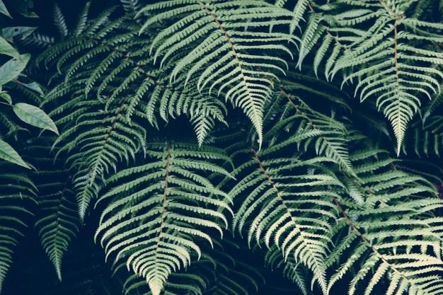 ブラッケンの葉 無料写真