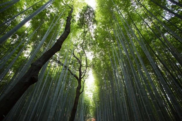 竹林の視点 無料写真