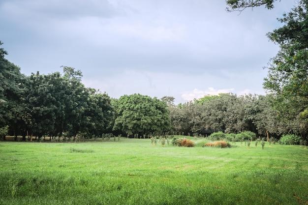 芝生と緑豊かな環境公園の風景 Premium写真