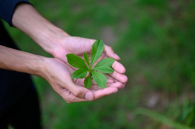 男性の手に緑の緑豊かな苗を置く Premium写真