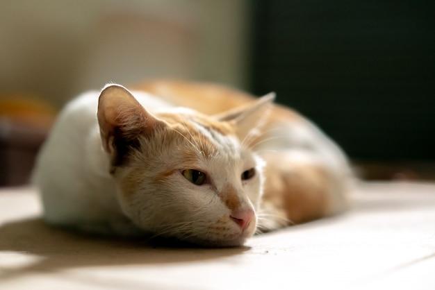 背景をぼかした写真を段ボール紙に茶色と白のタイ猫を敷設します。 Premium写真