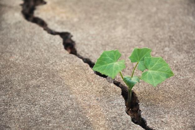 壊れた地面に成長している緑の若い植物。 Premium写真