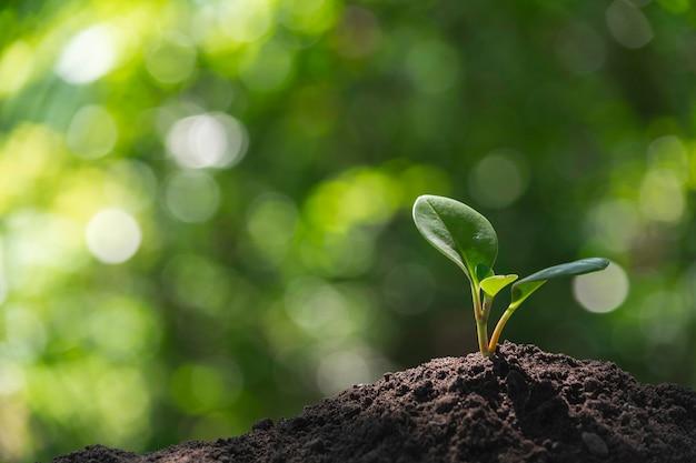 土壌で育つ苗と植物 Premium写真
