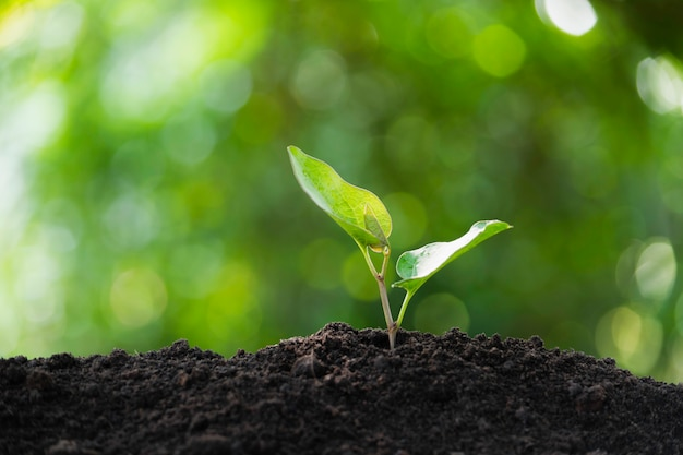 土の中で育つ苗と植物および挿入テキストのためのスペース Premium写真