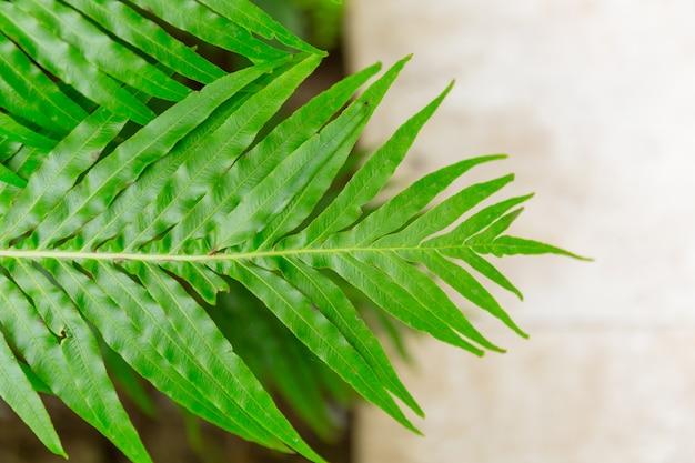 緑のシダの葉の熱帯雨林の植物の背景。 Premium写真