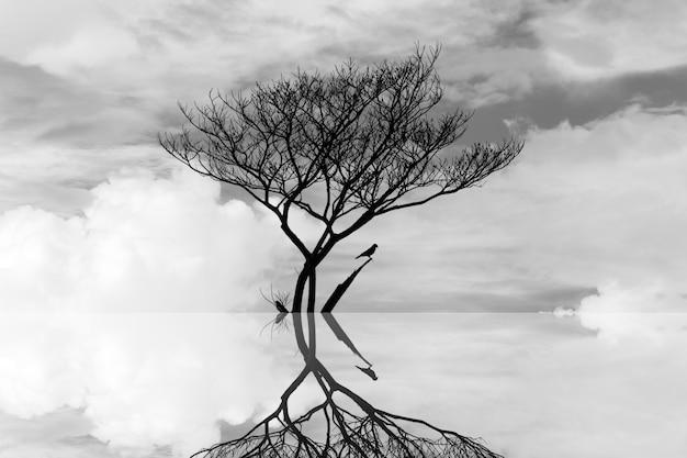 水アートの抽象的な写真で死ぬ木 Premium写真
