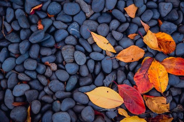 黒い小石の自然の秋の自然の秋の葉 Premium写真