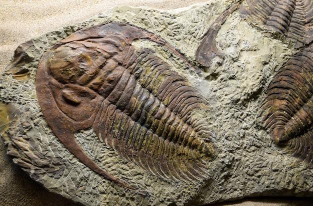 ジュラ紀の化石化石 Premium写真