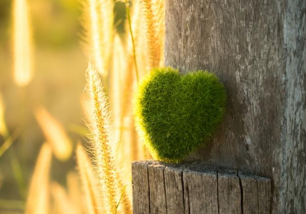 夕日の光の背景を持つ木材に緑の心。 Premium写真