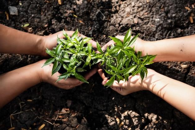 Человеческая рука держит молодое растение вместе Premium Фотографии