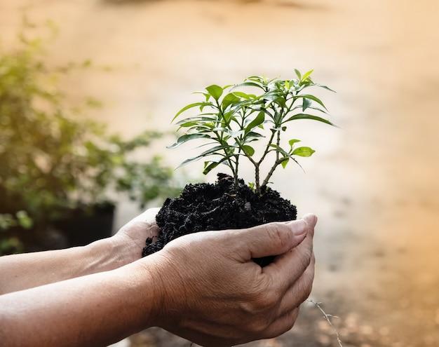 Человеческая рука держит молодое растение Premium Фотографии