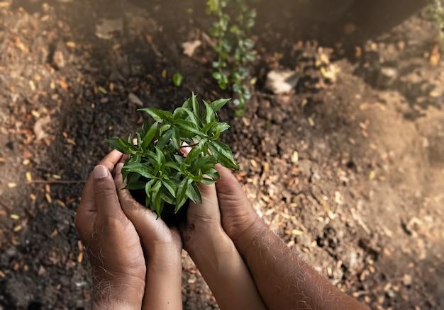 Маленькое дерево и почва были поддержаны рукой человека, вокруг размыто Premium Фотографии