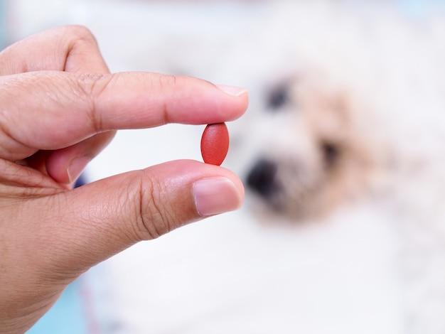 病気の犬の薬や薬、ペットの病気の治療薬で手。 Premium写真