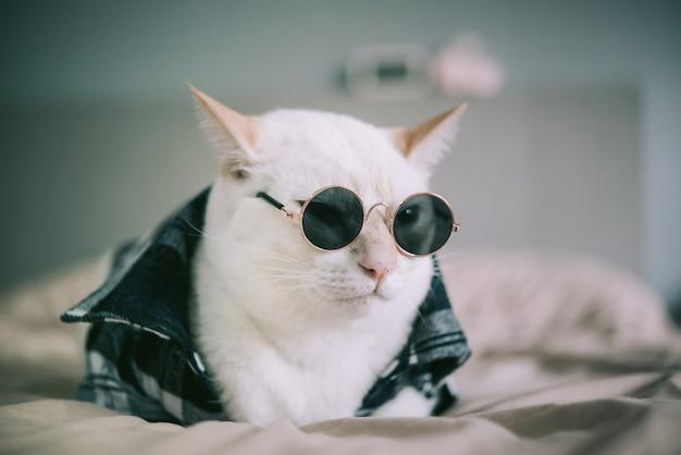 眼鏡をかけている白猫の肖像画 Premium写真
