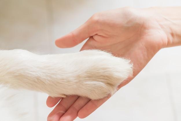犬の足と人間の手の接触、愛情のしぐさ Premium写真