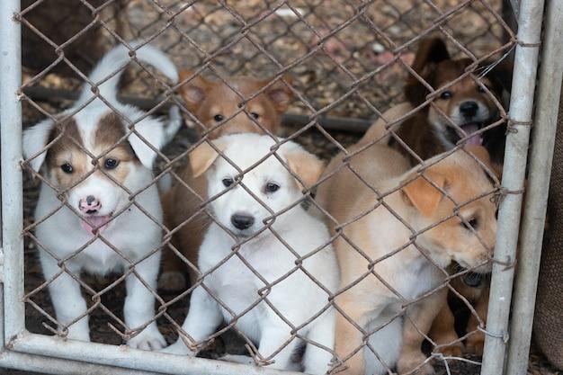 ケージにたくさんの子犬 Premium写真