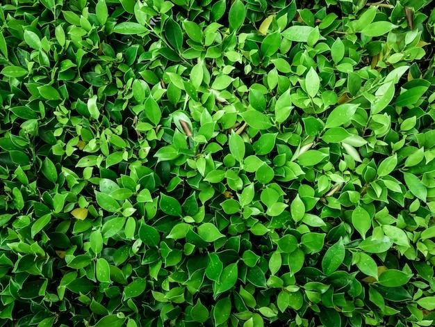 緑の葉の抽象的な背景 Premium写真