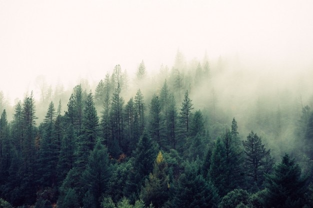 森に来て霧 無料写真