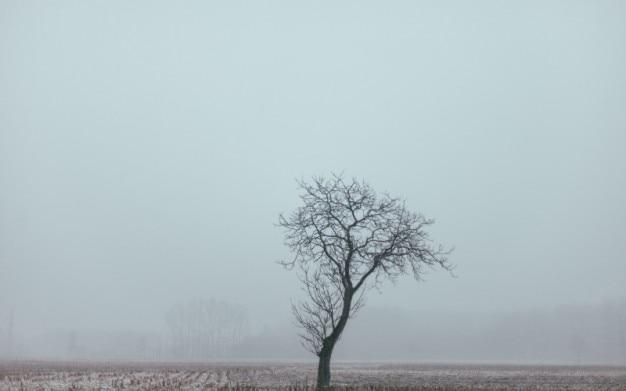 孤独な木と霧葉の 無料写真
