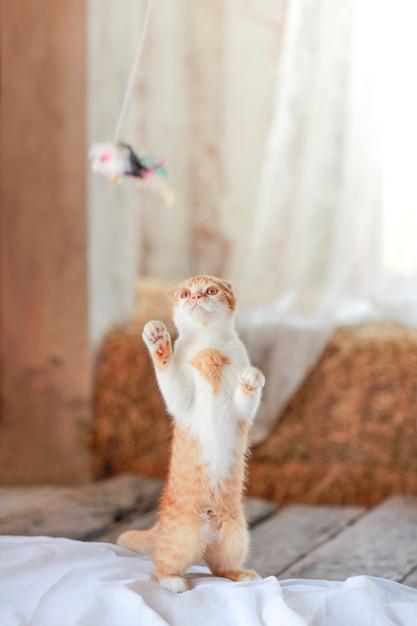 かわいい猫が床におもちゃを遊んで Premium写真