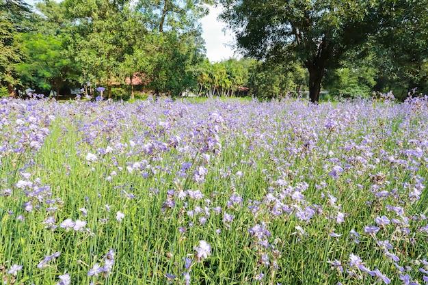 自然のナガミカン花畑 Premium写真