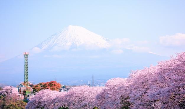 ピンクの桜の季節と日本の富士山 Premium写真