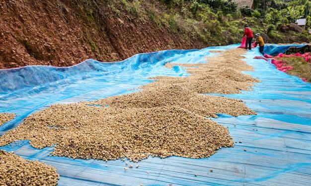 床に乾いたコーヒー豆とチェンライタイで土井チャンの農家の地元の事業 Premium写真