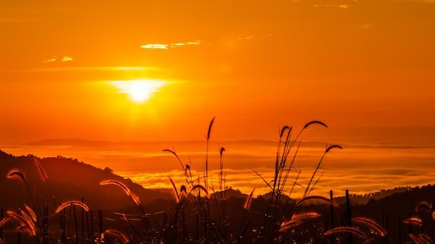 日の出と霧の背景と前景の草のシルエットの上の朝時にカラフルな風景 Premium写真