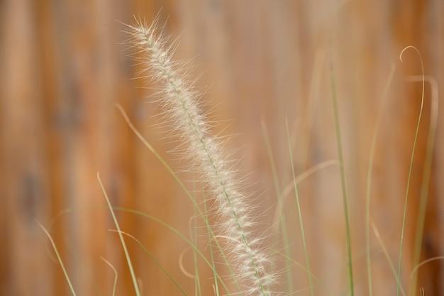 庭の草の花。メモリの概念。 Premium写真