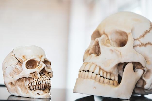 Два черепа были размещены в научной лаборатории. Premium Фотографии