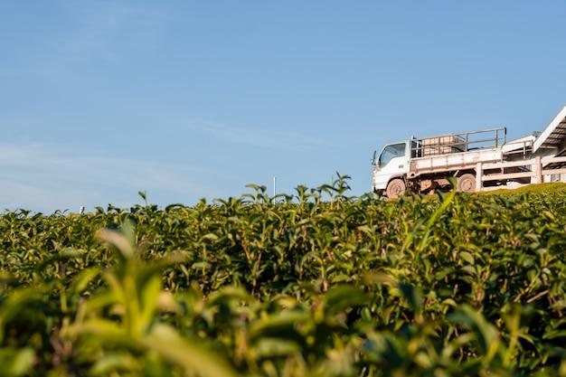 倉庫とトラックの丘の上の大規模な茶園の美しい風景を見る Premium写真