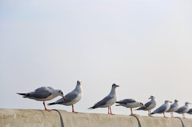 Чайки, стоя на пирсе, самут пракан, таиланд Premium Фотографии