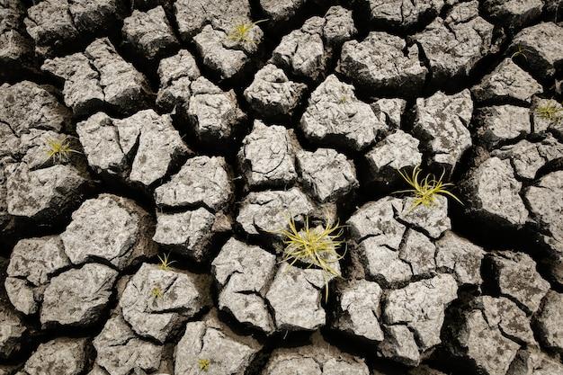 地球温暖化の概念 Premium写真