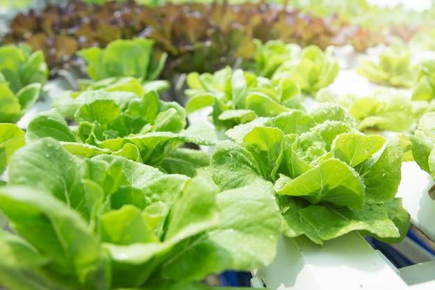 Закройте вверх в огороде во время концепции предпосылки еды утреннего времени с космосом экземпляра Premium Фотографии