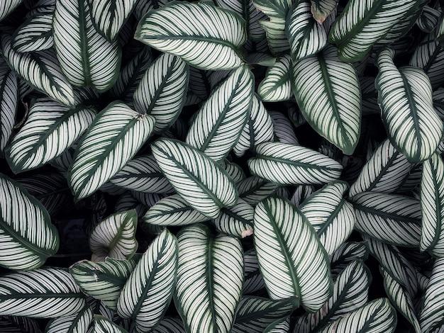Листья чередуются внахлест. Premium Фотографии