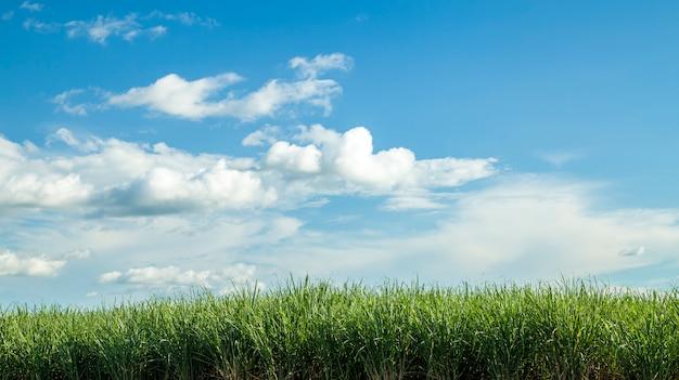 サトウキビ農園日没 Premium写真