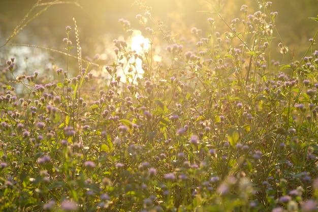 抽象的な花の夕焼け日没の柔らかな光とビンテージトーン。 Premium写真