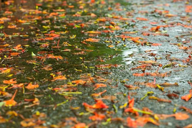 朝は濡れた床に花びらが落ちます。 Premium写真