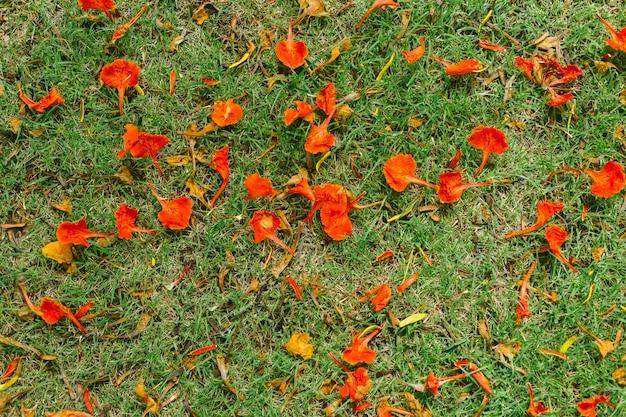 草の床に赤い花びら。 Premium写真