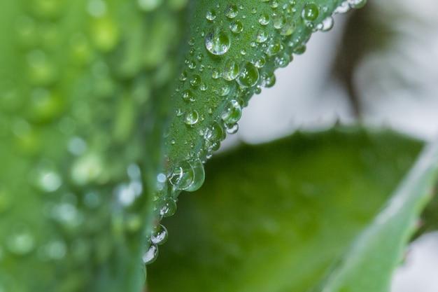 緑の葉に水滴 Premium写真
