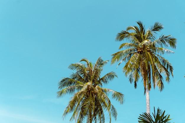 Концепция лета пляжа кокосовой пальмы Premium Фотографии
