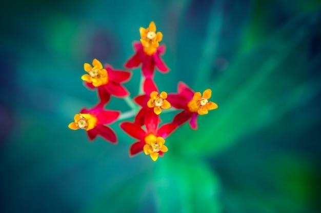 Макро крупным планом яркие маленькие красные цветы Premium Фотографии