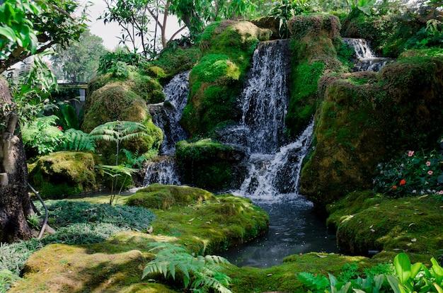 緑の森と滝 Premium写真