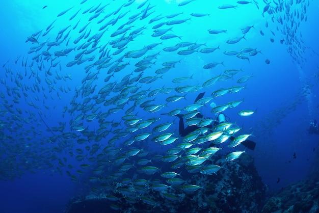 タイ、タオ島の水中サバ魚 Premium写真